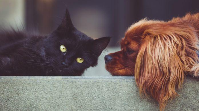 pericoli di una casa per cani e gatti