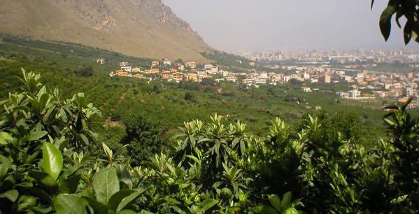Scorcio della borgata di Ciaculli sovrastata dal monte Grifone. Autore Conca d'Oro