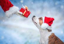 Natale da cani...