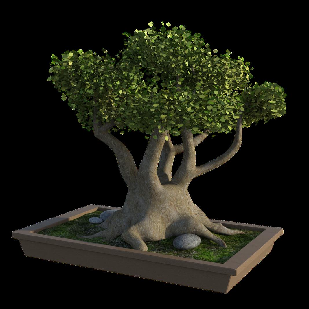 Corso di bonsai