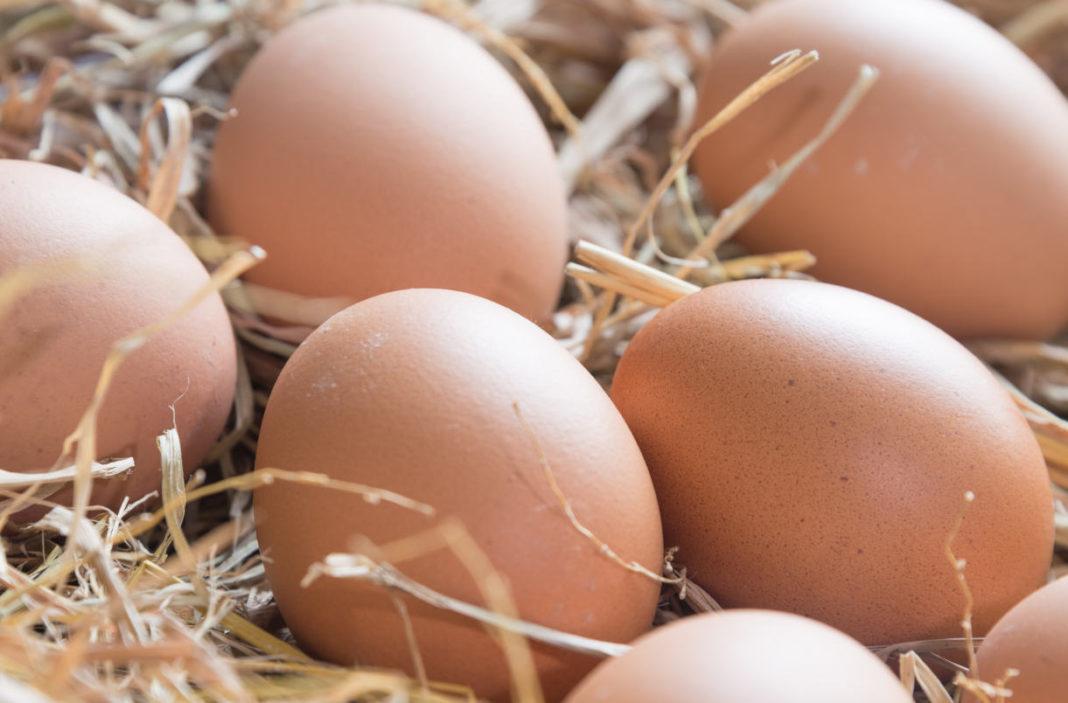 Uova a marchio senza segreti