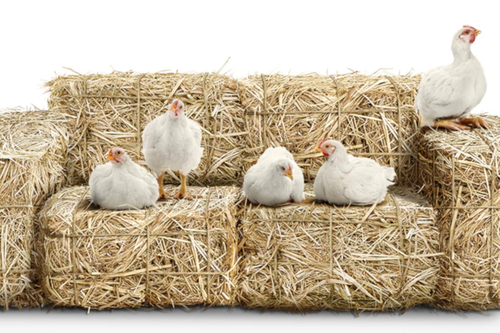 Polli a marchio Coop
