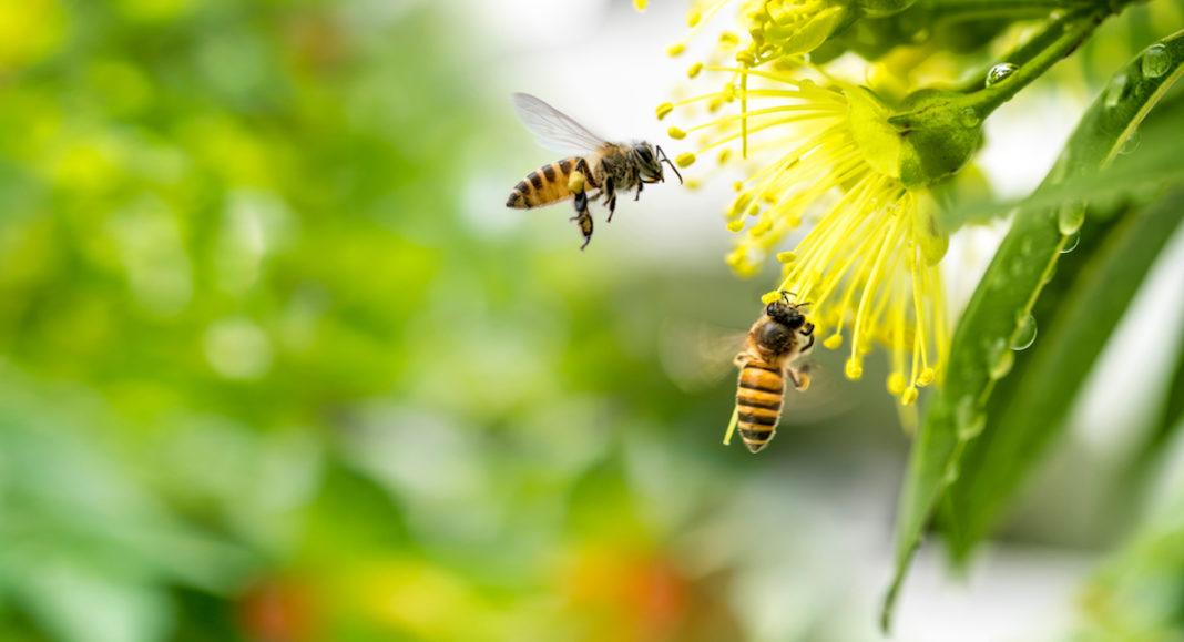 A lezione dalle api