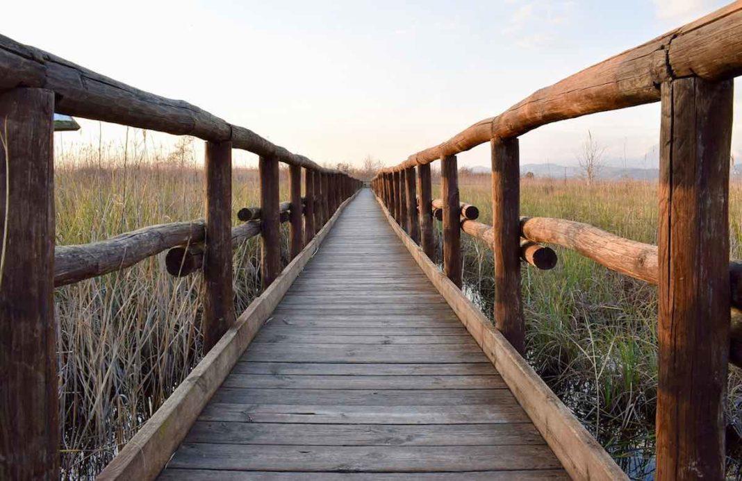Camminata al lago di Massaciuccoli