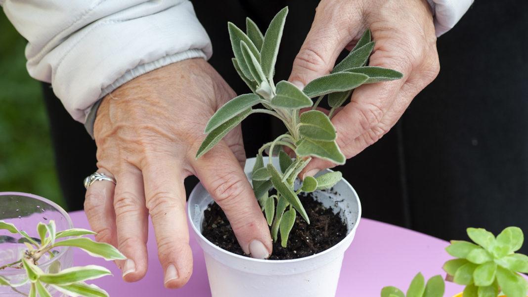 Come riprodurre le piante per talea