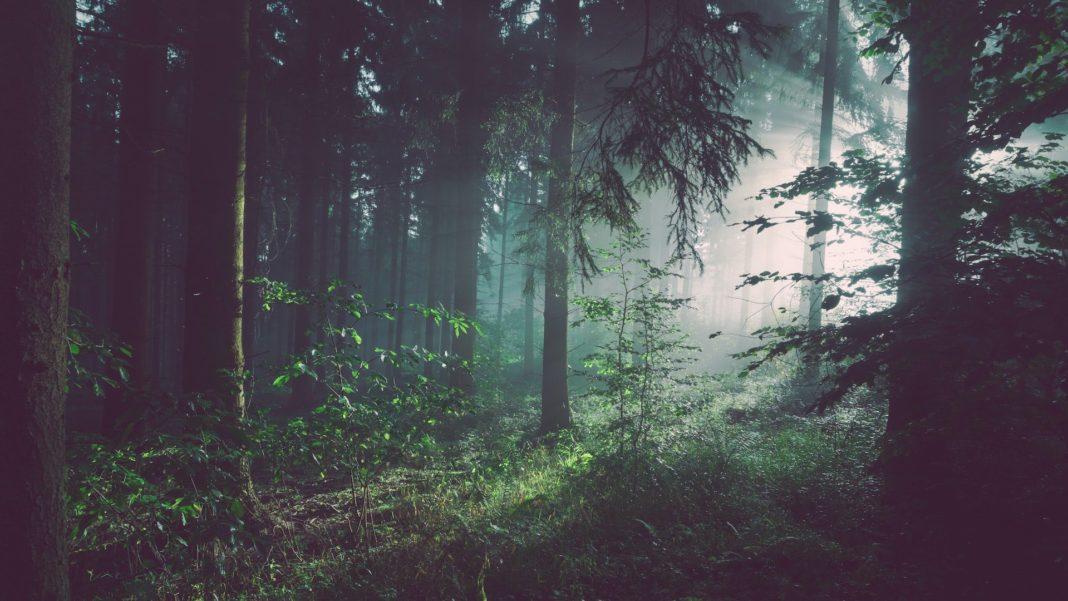 La foresta che cura