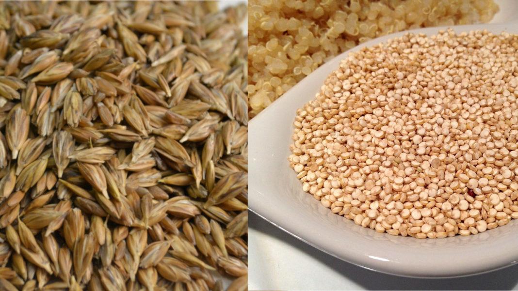 Farro quinoa