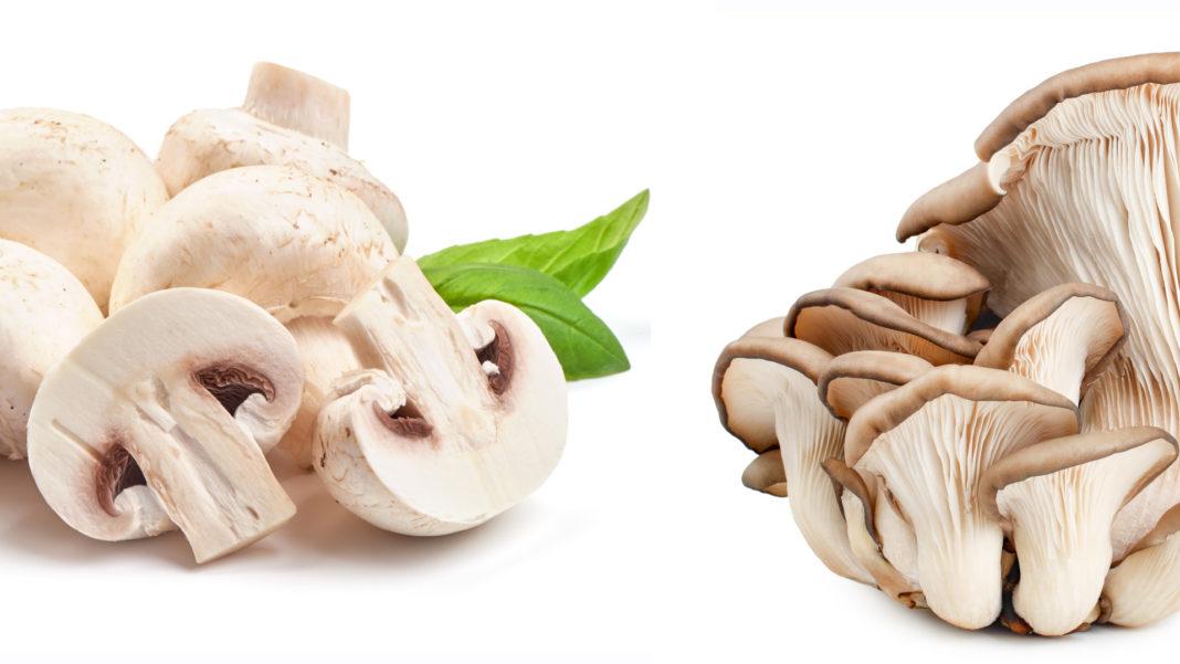 Funghi coltivati